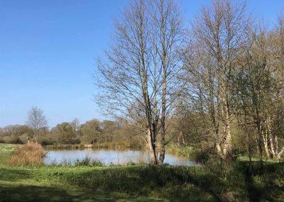 stock pond 2